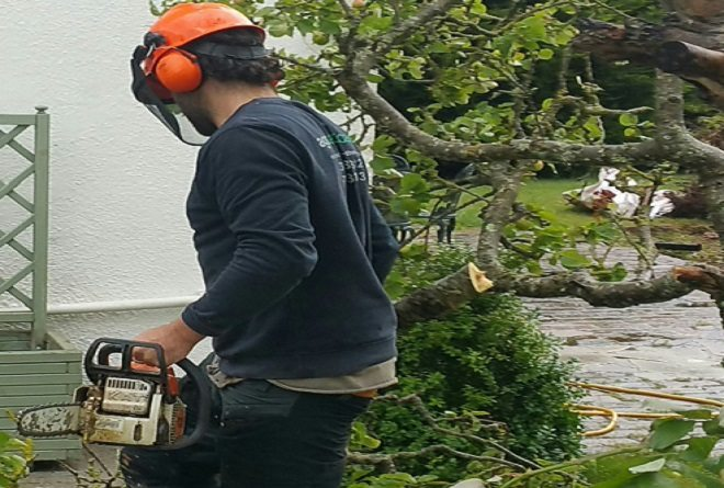 tree work and cutting