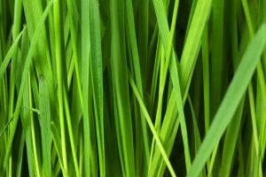 grass and lawn maintenance